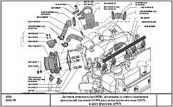 Расположение датчиков системы управления двигателем УМЗ-4216 с электронным впрыском топлива