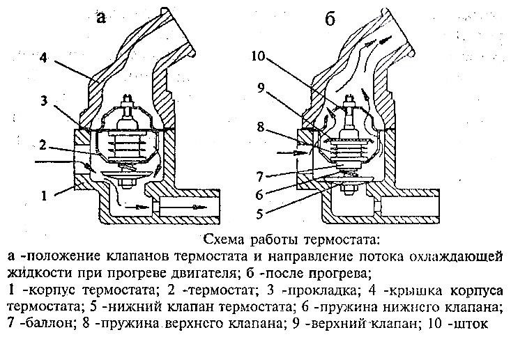 Схема работы дыхательной системы фото 906